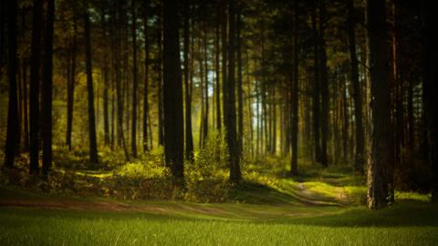 Parques y zonas naturales para disfrutar de la primavera cerca de El Encinar