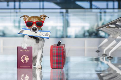 perro-con-papeles-para-viajar