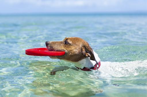 perro-bañandose-en-playa