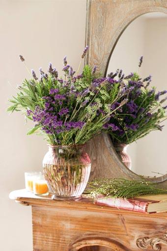 Plantas de invierno para interior y exterior