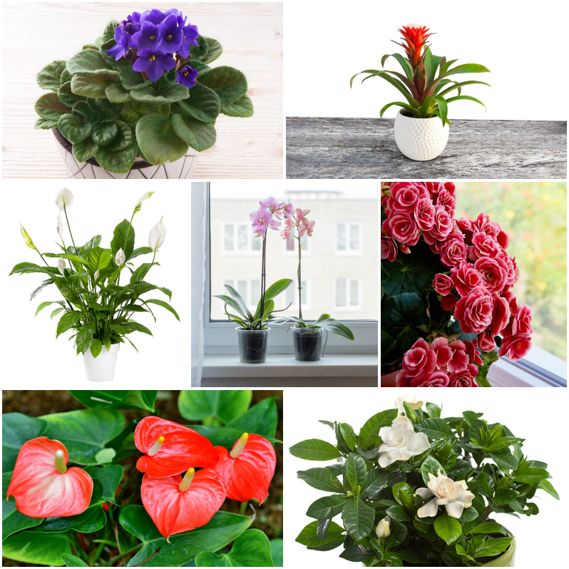 Plantas de interior y exterior para cultivar en primavera