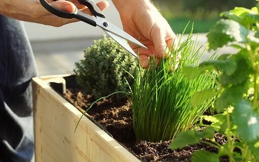 Cómo construir un huerto en el jardín