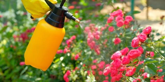 Cómo eliminar las plagas del huerto y del jardín